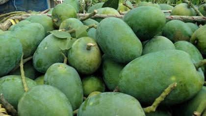 Fazly mango business gains momentum in Rajshahi