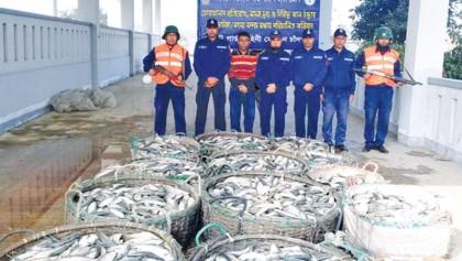 60 maunds of 'jatka' seized