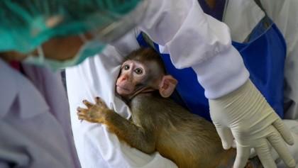 Thailand enters global coronavirus vaccine race with trials on monkeys