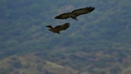 South Sudan: unexplored Eden of biodiversity