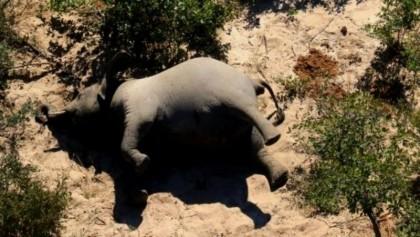 Over hundreds of elephants found dead in Botswana