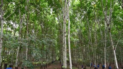 Work together to preserve biodiversity: UN chief