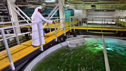 Salmon farming booms in Dubai