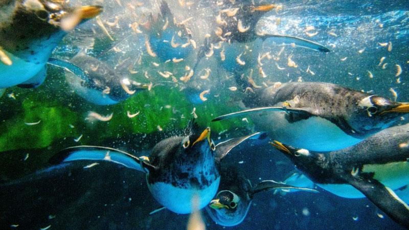 Hong Kong penguins chill during coronavirus pandemic