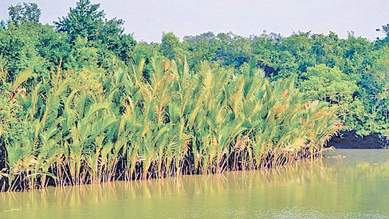 Place Sundarbans on World Heritage in danger list: IUCN