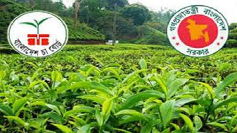 9.8 lakh kilograms of tea sold in 2nd auction in Ctg