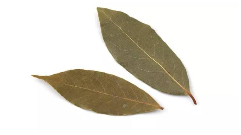 Health benefits of tej patta or bay leaf