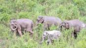 Xishuangbanna elephant feeding ground a success