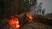 5 things to know about burning Amazon rainforest