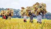 Bangladesh agri sector posts notable improvement: ADB
