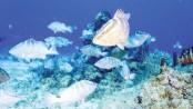 Best aquaculture practice can boost fish production, export: Experts