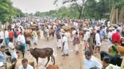 Ctg cattle markets get momentum