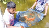 College student meets educational expenses by farming ornamental fish