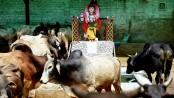 'Cow vigilantes' kill 3 in India