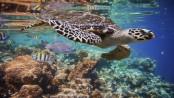 UN warns of 'unprecedented biodiversity loss', spread of disease