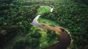 Amazon deforestation accelerates by 34.5 pc by July