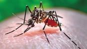 Dengue deaths cross 100 mark across country