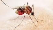 Drug-resistant malaria spreads across southeast Asia:Study