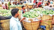 Mango business gains momentum in Rajshahi, Chapainawabganj