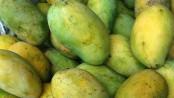 Mango trading gains momentum in Rajshahi