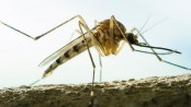 Mosquito menace grows in Dhaka