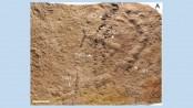 World's Oldest Footprints Found on Ancient Seafloor