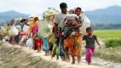 100 Rohingyas interviewed