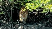 Two 'poachers' killed in tiger attack in Sundarbans