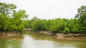 Sundarbans plays role as a carbon sink: Alok Sharma