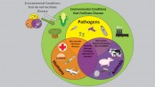 Zoonotic diseases and one health concept