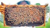 Economic growth through apiculture