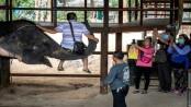 Coronavirus: Thailand's tourist elephants face crisis