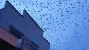 'Bat tornado' invades Queensland town in Australia