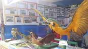 Daylong bird fair held on Jahangirnagar University campus