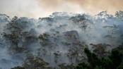 Toxic Sydney bushfire haze a 'public health emergency'
