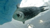 Climate change forces Arctic animals to shift feeding habits: study