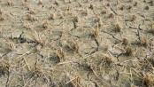 Small farmers 'need more climate aid to ward off famines': UN