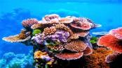 Global warming kills 14 percent of world's corals in a decade
