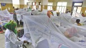 11 new dengue cases reported in 24hrs