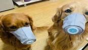 Coronavirus: Dog face mask sales on rise in China