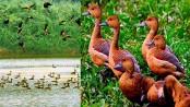 Arrival of migratory birds begins in northern region