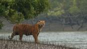 Sundarbans: Let's save our best friend