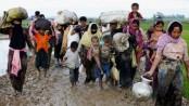 EU seeks steps for safe return of Rohingyas