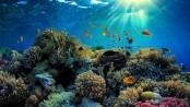 Great Barrier Reef 'in danger', Unesco says