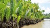 Coronavirus: Tourist gatherings banned in Sundarbans