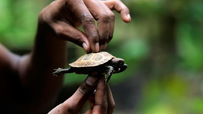 Near extinct tortoises rediscovered in Bangladesh