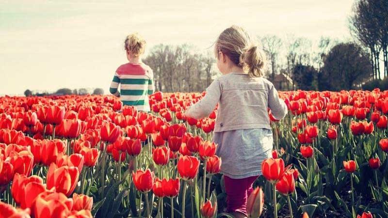 Dutch farmers plea to the tourist